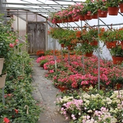 The Bougainvillea Greenhouse